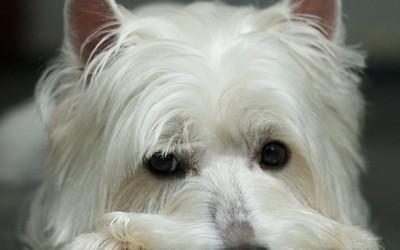 La ausencia de #esquizofrenia en animales da claves acerca de la genética de la enfermedad